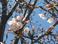 漸く春らしい天気 - 今日のN家