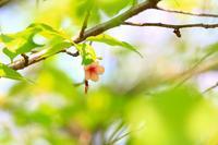 桜の写真を撮ったら、それは桜。 - 真実はどこにあるの?