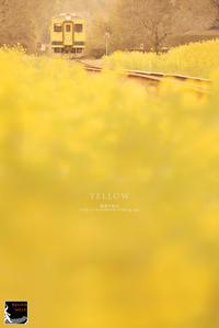 yellow - 箱庭の休日
