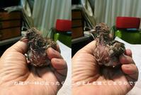 鳥、試練 - Tangled with・・・・・