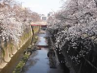 酢酸とお酢 4/5 (水) 春キャンペーン ネット割 - 大山マッサージ 指圧治療院