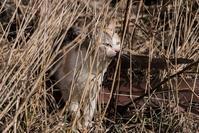 松前猫 ~再会~ - こんなものを見た2