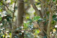 凝視!? - 趣味の野鳥撮影