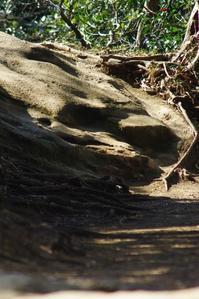 三浦半島の森へ11 - はーとらんど写真感