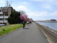 お花見ライドのお知らせ♪02 - 坂の町 横浜 鶴見の電動アシスト自転車専門店 Clean Water Factory