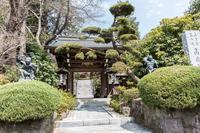 東慶寺から寺家ふるさと村へ - あだっちゃんの花鳥風月