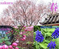 春爛漫 花より団子 簡単ビビンバ - 九州平水の美味しいもの日記