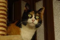 三毛猫ひかちゃん -52- - 殿様の試写室