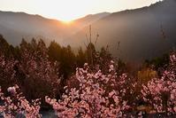 春の訪れの西吉野 - 峰さんの山あるき
