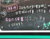 2017年3月 白浜パンダ見隊2 その4(2日め) 結ちゃん188日齢 - ハープの徒然草