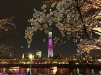夜桜 - カミナリハリナミカ?