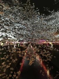 目黒川の満開の桜〜東京中目黒 - 素敵なモノみつけた~☆