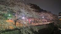 お花見 - ゲストハウス東京かぐらざか