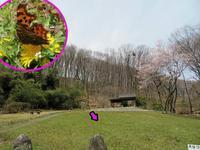 シータテハ初見 - 秩父の蝶