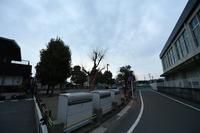 雨のち雨 - 写真家 田島源夫ブログ『しゃごころでっしゃろ!』