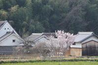 明日香村八釣  - ぶらり記録(写真) 奈良・大阪・・・