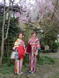桜と椿と素敵なお着物姿と。 - 京都嵐山 着物レンタル&着付け「遊月」