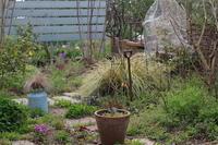 チューリップの咲く頃 - お庭のおと