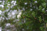 小雨降る一日 - お庭のおと