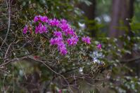 日和田山にも春が来た - デジカメ写真集