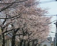 2017、櫻、咲く。-伍:吉例都電花鉄 - デハ712のデジカメ日記2017