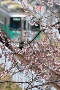 春めく - miyabine's フォト日記2~身の周りのきれい・可愛い・面白い~