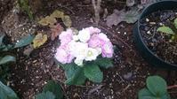 2017年4月6日現在の庭のお花達 - つぶやき。記録。時々日記。