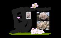 お花見日和 - 文字あそび