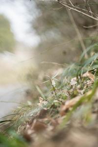 春の野草 - この道は風なり