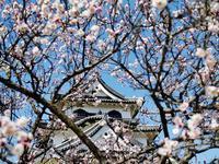 城の日 - syuka's 駄photo base