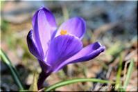 春一番の色 - 北海道photo一撮り旅