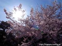 春満喫の散歩とおやつと食事 - 丁寧な生活をゆっくりと2