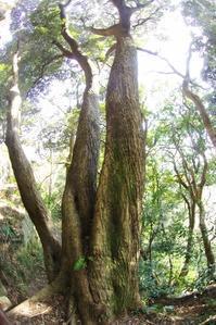 三浦半島の森へ12 - はーとらんど写真感