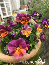 お花と昨夜の春の恵みの晩ごはん♪ - まこぺんこ's  WORLD