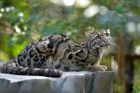 美猫 - 動物園へ行こう
