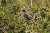 3月の夏 - 野鳥写真日記 自分用アーカイブズ