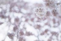 花曇り - ぽとすのくずかご