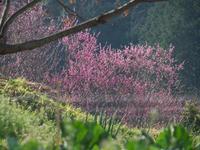 明日香・奥山 遅れた春 - まほろば 写真俳句