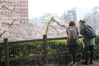 満開らしい・九段あたり-3 2017年4月3日 - 暗 箱 夜 話 【弐 號】