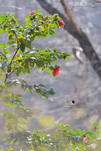 桜だけではなくて - お花びより