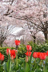 再び大島小松川公園へ - kenのデジカメライフ