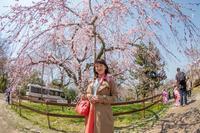 春の京都花見散策~その1☆円山公園・八坂神社・三年坂 - 泉北ニュータウンぶらり探索