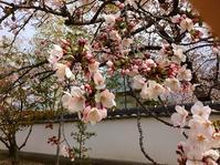 和歌山市内の神社と寺を訪ねて 花見をかねてウオーク下見-2 - 東 道のきのくに花街道