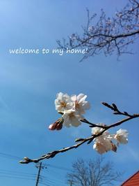 新学期、おたよりの管理は、今年もこれで行きます。 - welcome to my home!