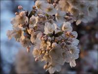 お花見に予想外の出会い - L'Ambiance du Midi