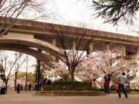 今朝の散歩と桜 - いくつになってもカバン好き