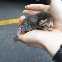 子猫ちゃん保護!里親さん探しています - オール電化生活!カノンとキアと猫ちゃんと愉快な仲間