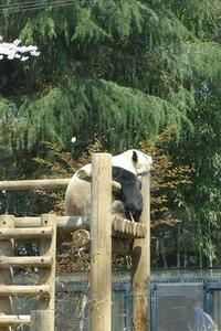 上野動物園。 - natural life
