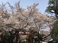 桜情報 - わたしの好きな物