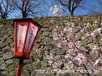 日本100名城めぐり~津山城@岡山県 - 自分カルテRで思考の整理を~整理収納レッスン in 三重